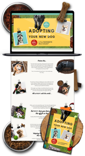 Dog Niche Weeby Website Business For Sale- 1PEZ Design a Websites